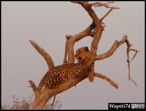 Balade australe... 11 jours en Namibie IMG_0347