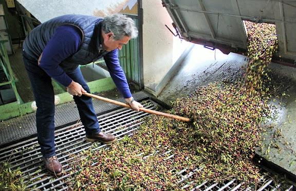 Recepció olives.jpg