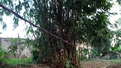 Tidak Hanya Di Ciranjang, Ketinggian Kabel PLN Di Beberapa Kecamatan Juga Tidak Sesuai Standar