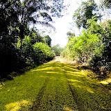 La piste vers le Rio Teles Pires, município de Nova Canaã do Norte (Mato Grosso, Brésil), 11 juin 2011. Photo : Cidinha Rissi