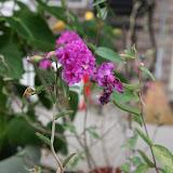 Gardening 2012 - IMG_3319.JPG