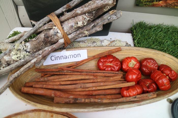Cinnamon, canela