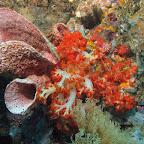 Reef (Bangka Island)