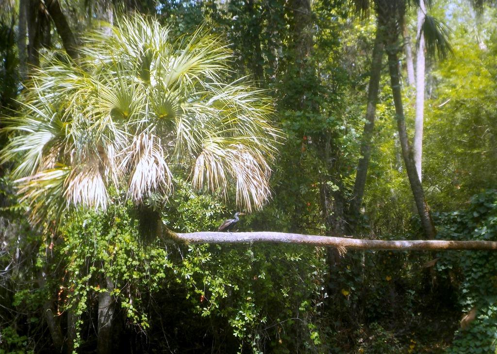 [Anhinga+on+palm+tree-2%5B3%5D]