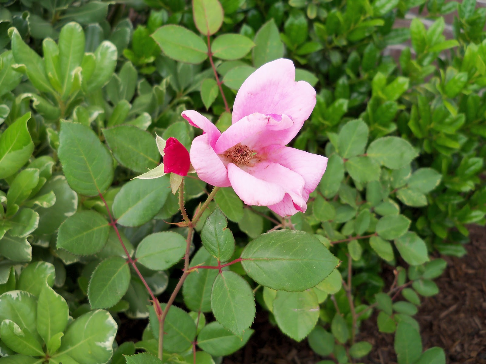Gardening 2010 - 101_1435.JPG