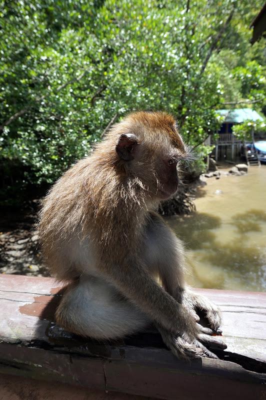 DSC06237 - Monkey on duty
