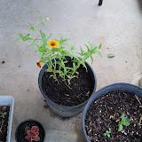 Gardening 2010, Part Three - 101_3626.JPG