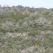 TRAIL Terras de Ansiao (149).JPG