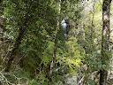 Avant de quitter l'Agnone, on y admire une belle chute au milieu de la forêt...