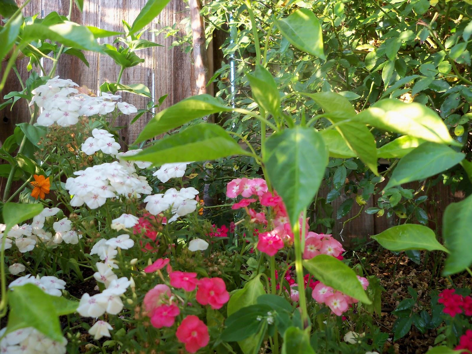 Gardening 2012 - 115_2643.JPG