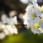 2015.04.23.,Klasztor wiosną,fot.H.L (10).jpg