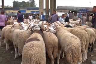 Aïd El Adha: vers l'importation d'un million de têtes d'ovins du Soudan!