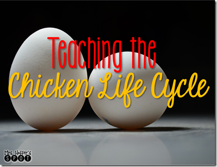 chicken ife cycle