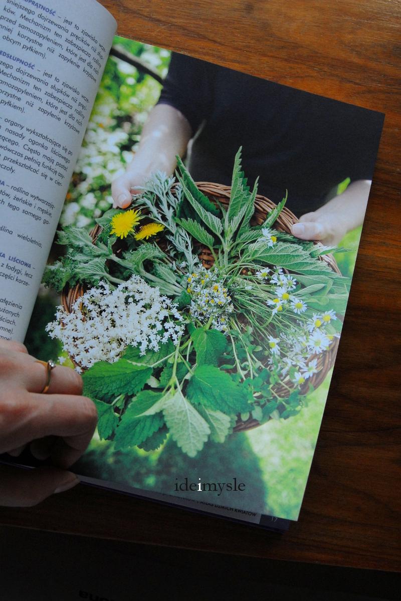 rośliny dziko rosnące w kuchni, dzikie rośliny jadalne, edible wild plants book, herbs