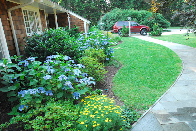 Combination of perennials and shrubs