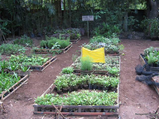 Square Foot Gardening - Picture%2B350.jpg