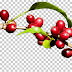 Get the 100% Kona Beans You Want by Growing Your Own Coffee Beans