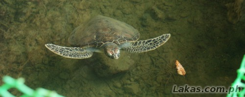 Turtle inside the ecopark
