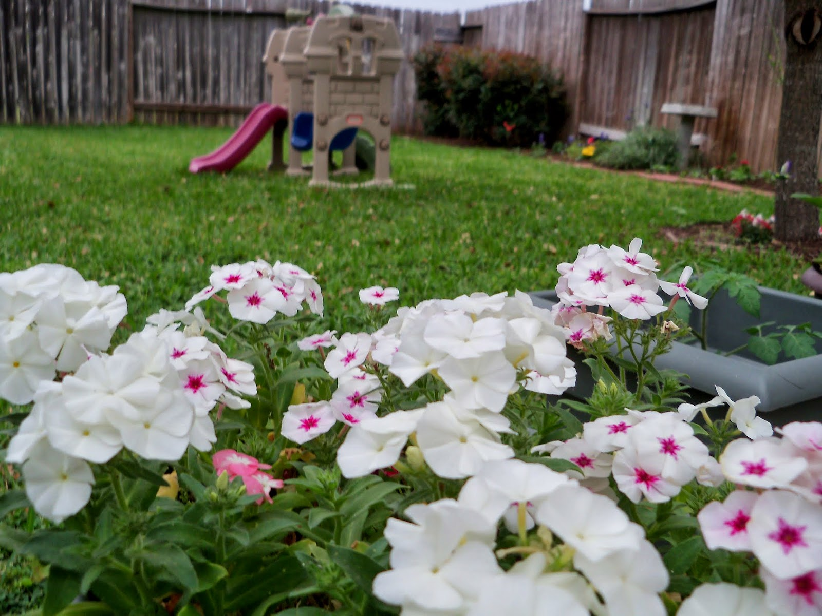 Gardening 2014 - 116_1252.JPG