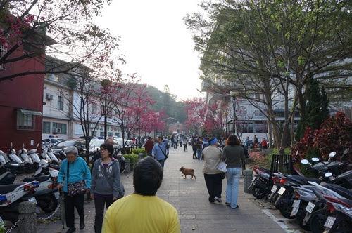 台北景點推薦-三峽也有櫻花可看喔【三峽老街】