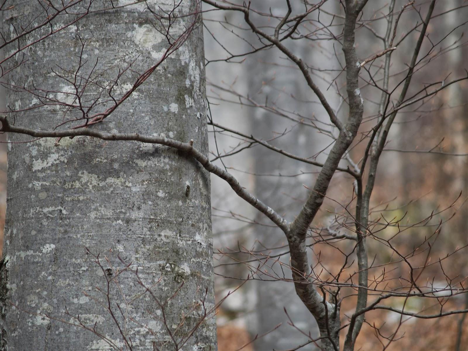 Orientacijski vikend, Črni dol 2007 - P0176119.JPG
