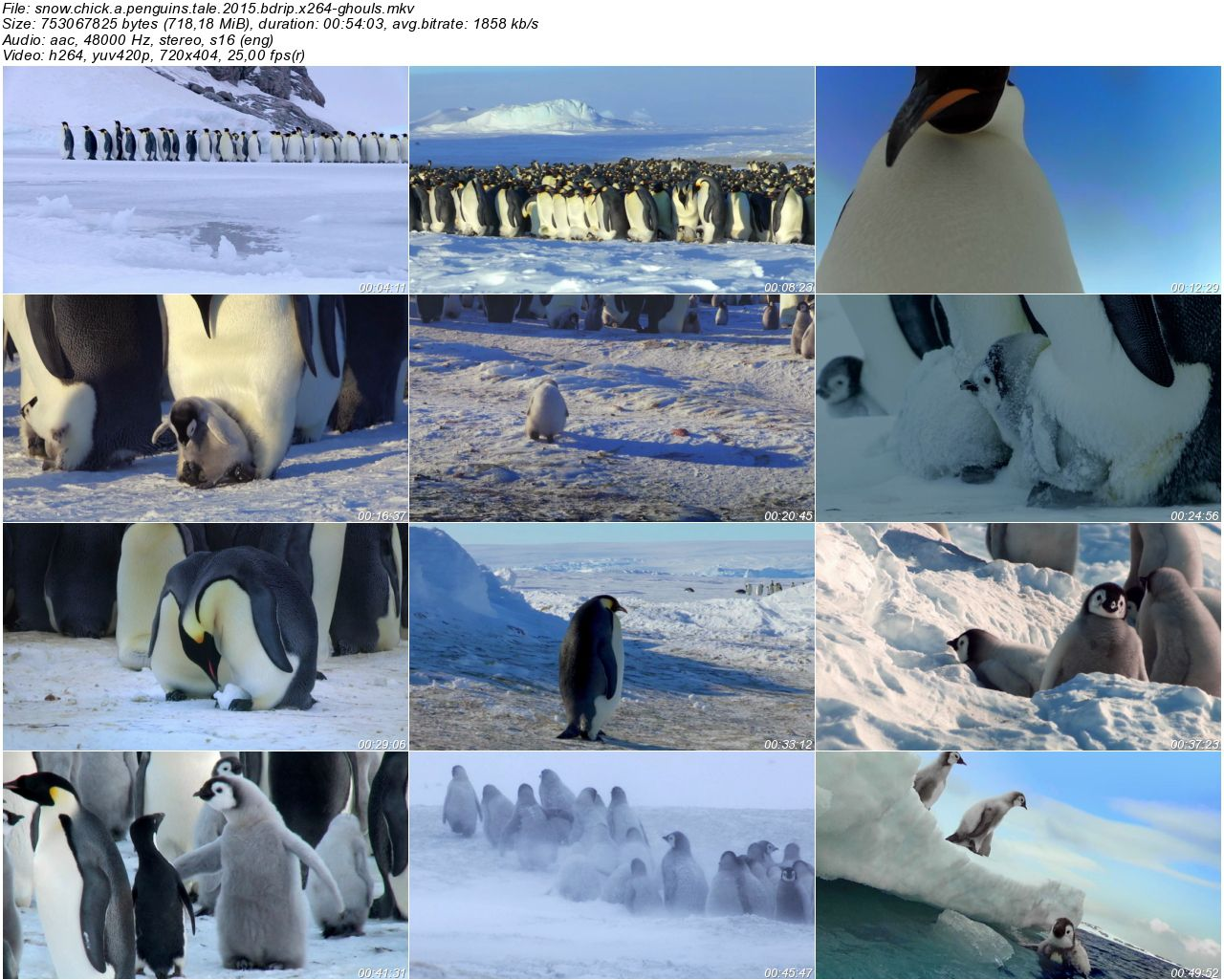 Snow Chick A Penguins Tale - 2015 BDRip x264 - Türkçe Altyazılı Tek Link indir