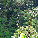 Mount Totumas, 1800 m (Chiriquí, Panamá), 23 octobre 2014. Photo : J.-M. Gayman