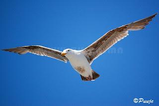 Захлай шувуу /Photography by Пүүжээ/