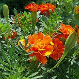 Gardening 2010, Part Two - 101_3299.JPG