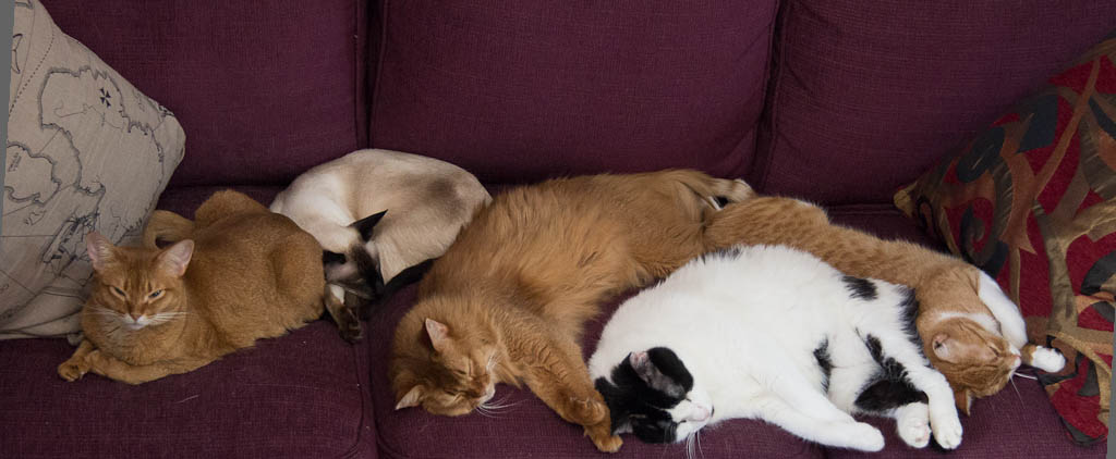 Cats Sleeping On a Purple Couch