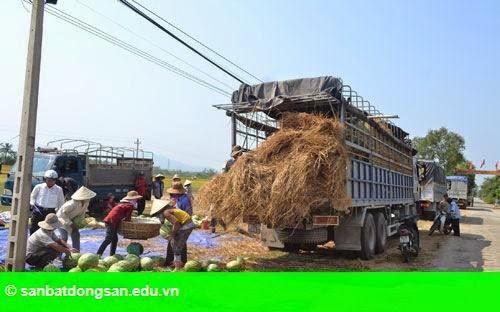 """Hình 1: Quảng Nam khuyến cáo khả năng """"trục lợi"""" vụ dưa hấu"""