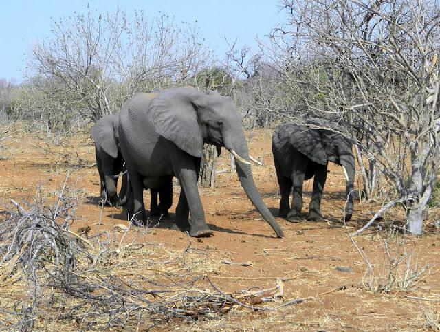 Chobe game reserve