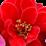 Удобрения для комнатных растений - ГИЛЕЯ's profile photo