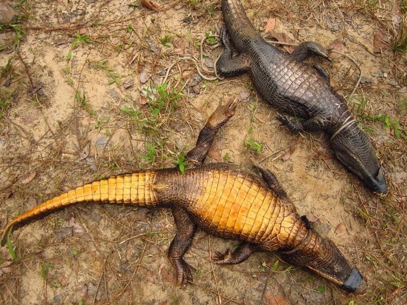 abanda-cave-crocodiles-4