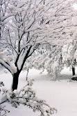 שלג באמירים.JPG