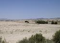 03 halfwoestijn sierra aloubierre.jpg