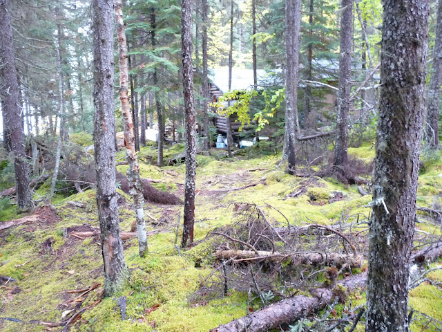 The view as you approach the Lac Fourchette hunt camp. Note extensive moss cover on the forest floor.