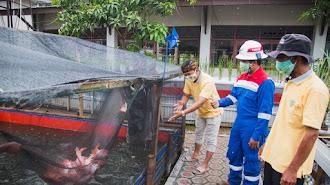 Demplot Akuaponik PT Pertamina EP Subang Field Wujud Respon Ketahanan Pangan Saat Pandemi