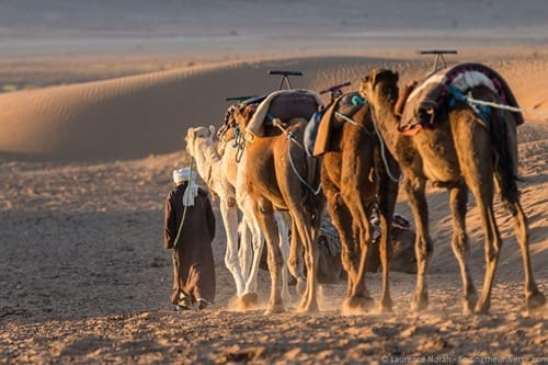 Camels and herder in desert Morocco