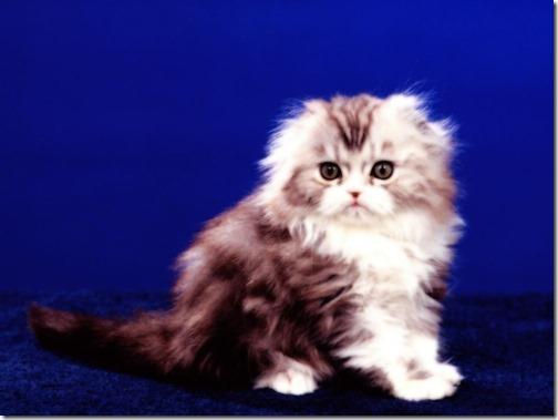 fotos de gatos (28)