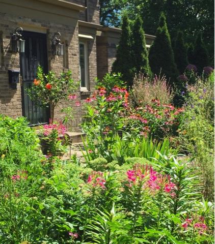 Wife, Mother, Gardener: The Rose Garden in August