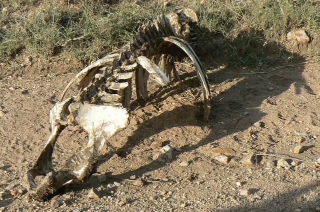 Serengeti National Park - skeleton