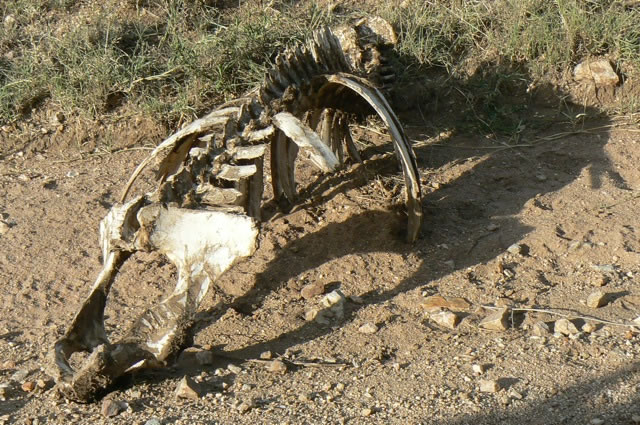 Serengeti National Park - skeleton
