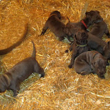 Saffy's babies @ 3 weeks