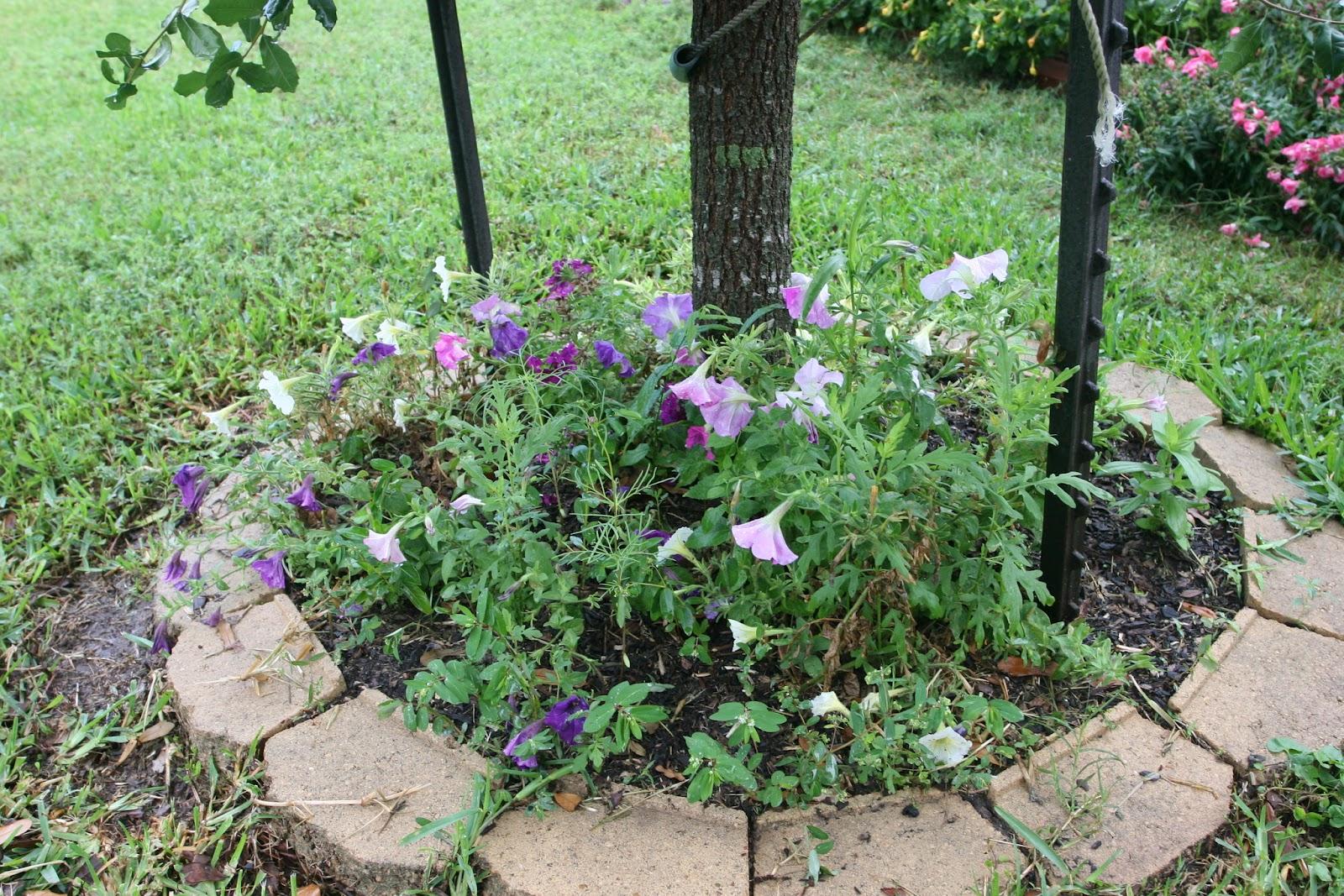 Gardening 2012 - IMG_3537.JPG