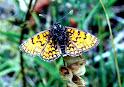 mariposas.jpg