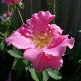 Gardening 2010, Part Three - 101_3700.JPG