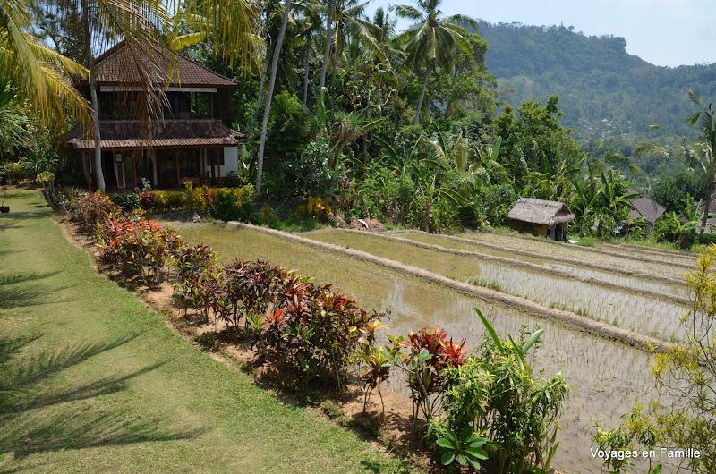 Lihat Sawah 1 - rice fields