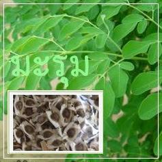 ผลิตภัณฑ์จากสมุนไพรมะรุม พืชมหัศจรรย์ ช่วยบำรุงสุขภาพ และ ผิวพรรณ