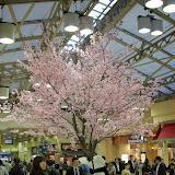 2014 Japan - Dag 1 - marjolein-IMG_0164-0096.JPG